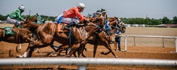 Horse Racing News