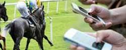 bet horse