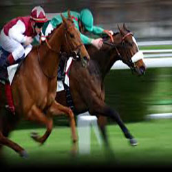 Panama Gaming Control Board Authorize Online Horse Betting